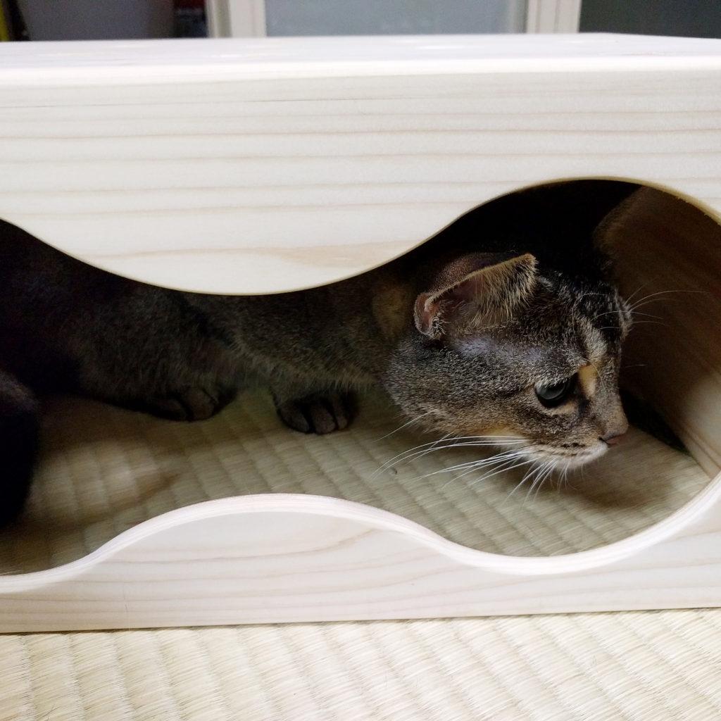 ネコが入ったネコもぐらたたき