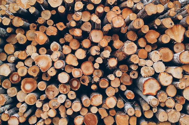 積み上がった間伐材