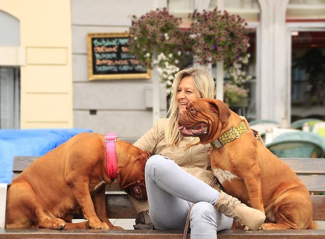 飼い主に懐く2匹の犬